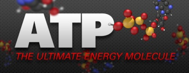atp-ultimate-molecule